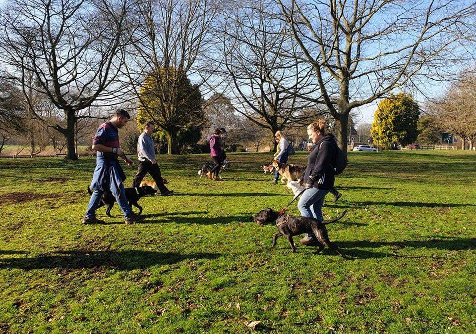 Reactive dog walking group